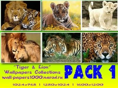 Обои для рабочего стола животные, обои тигр, обои лев, обои гепард. Качаство: отличное. Подробнее...