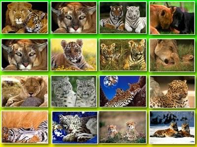 Скачать обои в архиве и обои тигры и тигрята