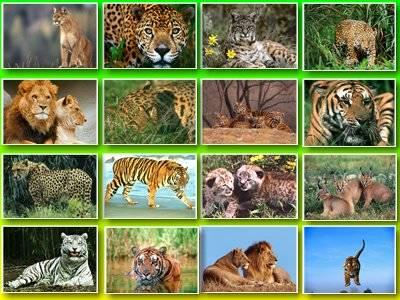 Обои львы и леопарды
