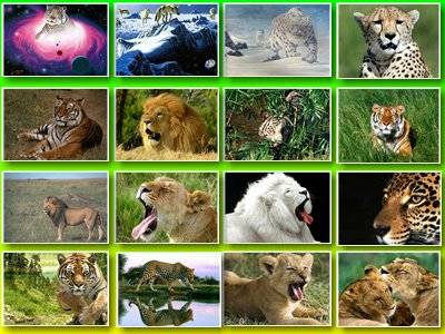 скачать обои в архиве, обои тигр,обои тигрица и обои рыси