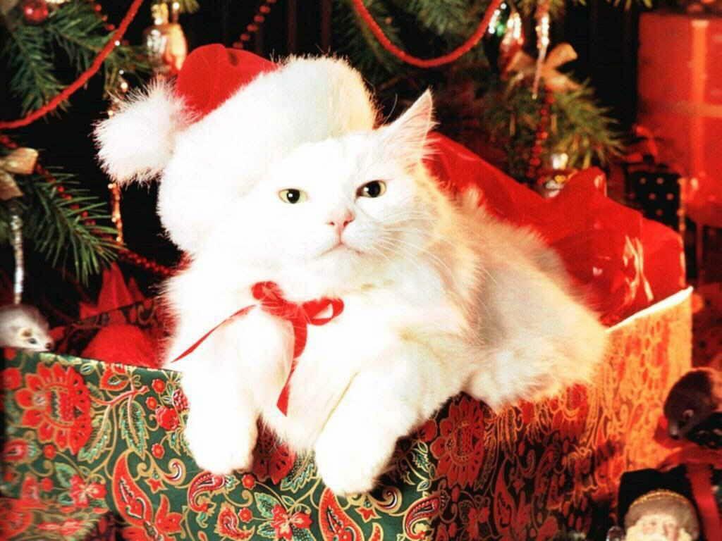 Обои на рабочий стол ПК на тему: Новый год, Рождество, Праздник. Desktop Wall-papers - Free Download